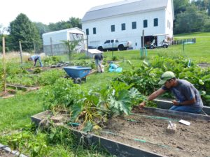 Planting in our Congregational Garden, near the barn