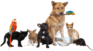 Two dogs, two cats, a bunny, two mice, a parrot, lizard, rat and a fish in a fishbowl