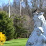Bird on blessed Mary statue